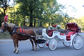RED and WHITE  CARRIAGE