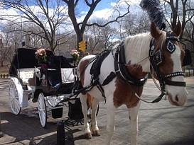 WHITE and BLACK  CARRIAGE
